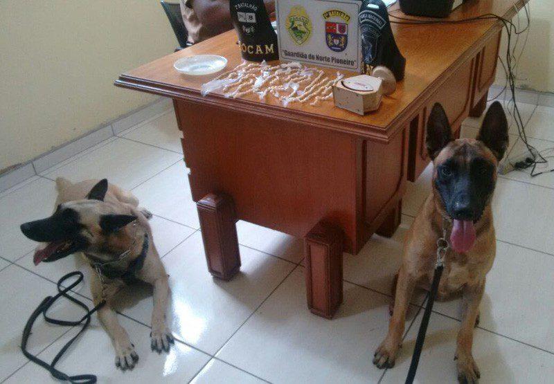 cães1